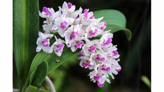 7 ароматных орхидей с пряным запахом