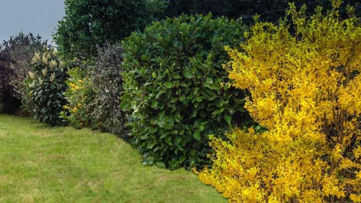 8 декоративных кустарников, цветущих весной