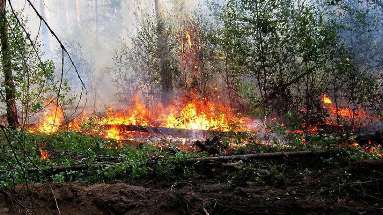 Пожароопасный сезон объявили в лесах Московской области