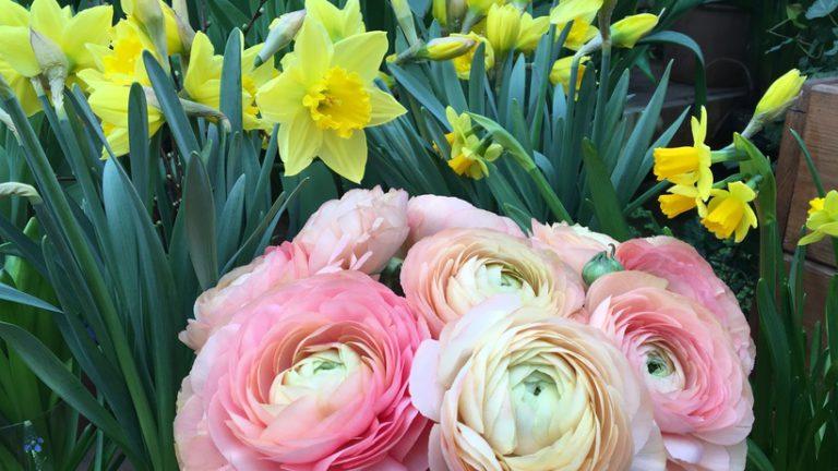 Весенний фестиваль цветов стартует в столичном «Аптекарском огороде»