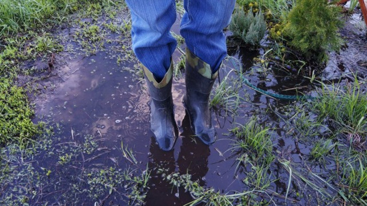 Весеннее затопление участка — как спасти растения? © Людмила Светлицкая