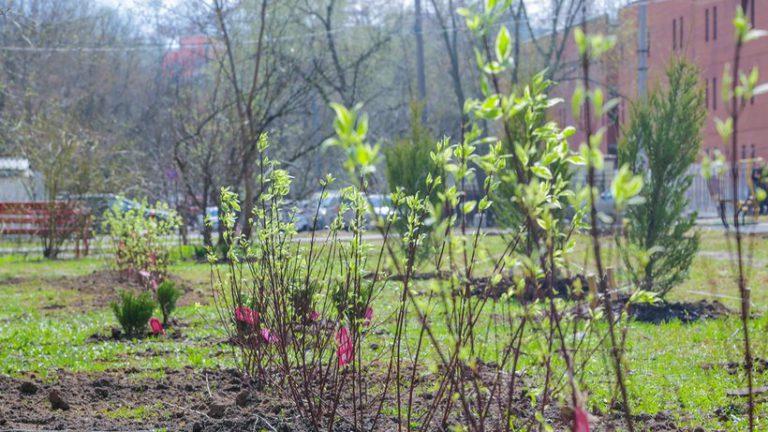 30 тыс деревьев высадят в рамках новой акции в парках Москвы в 2019 году