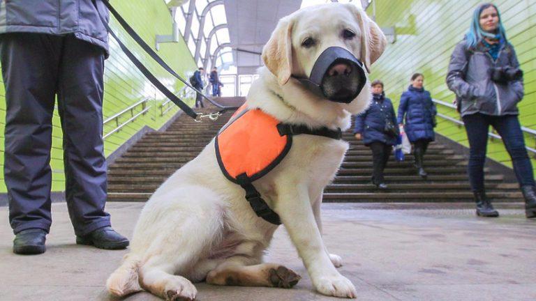 Акцию «День с собакой‑проводником» проведут в парках столицы 27 апреля 2019 года