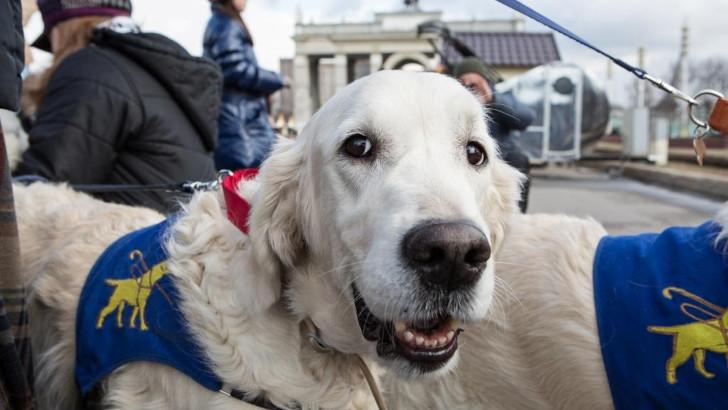 На ВДНХ отметят Международный день собак-поводырей