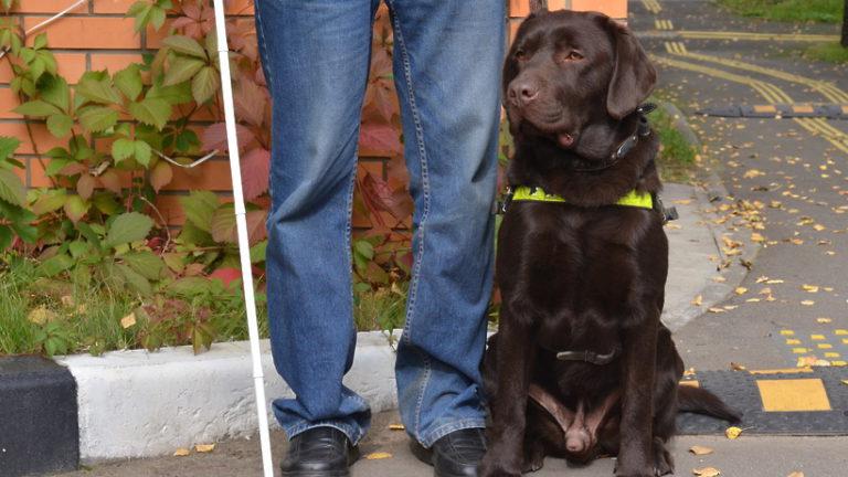 Акцию «День с собакой‑проводником» проведут в парках столицы