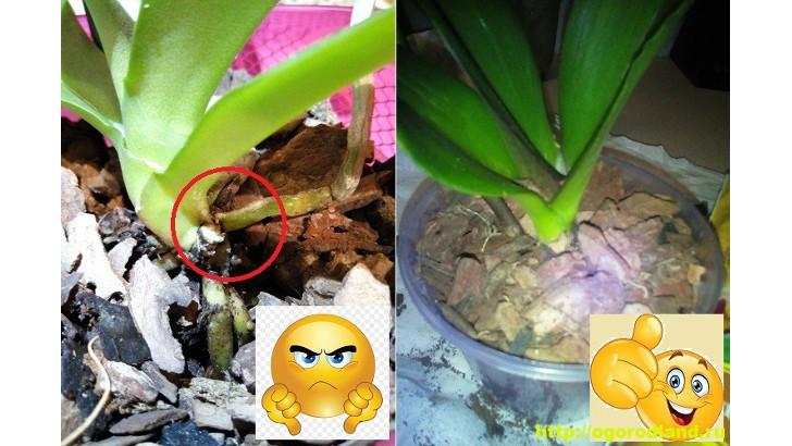 Как спасти орхидею? Лечение болезней орхидеи. Проблемы ухода