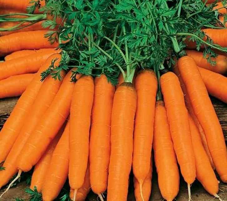 Морковь «Амстердамская». © good-harvest