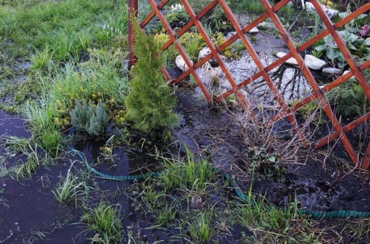 Не всем растениям в этой клумбе удалось пережить потоп. © Людмила Светлицкая
