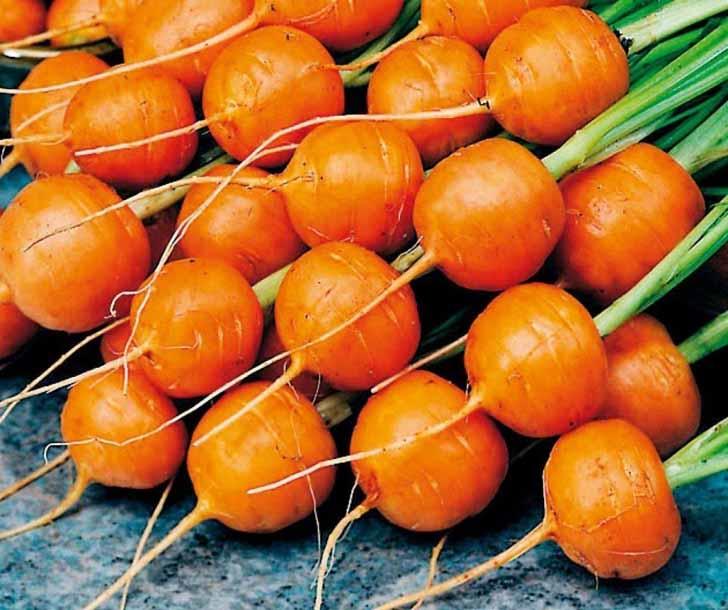 Морковь «Парижская каротель». © 1semena