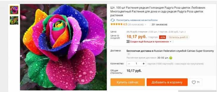 Что смешнее – подобная расцветка розы или семена розы?
