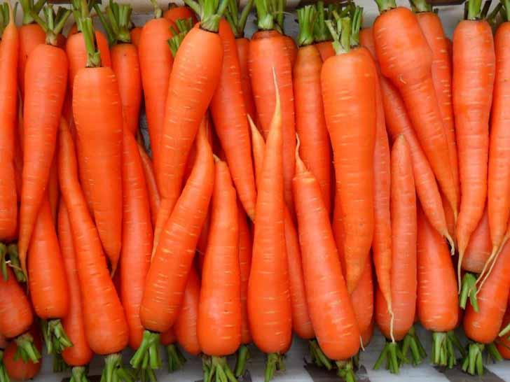 Морковь «Оранжевый мускат». © yukle.mobi