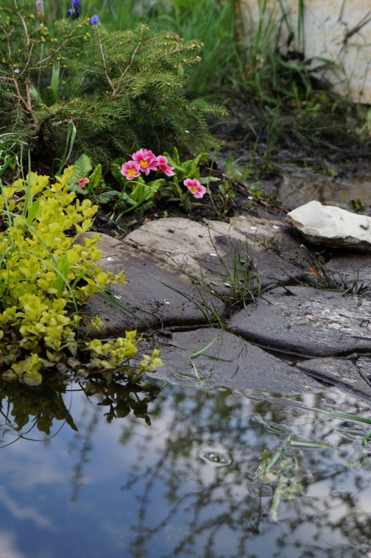 Декоративный прудик вышел из берегов, приняв часть воды на себя. © Людмила Светлицкая