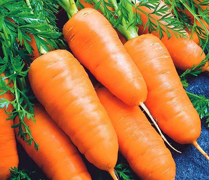 Морковь «Каротель». © fedsp