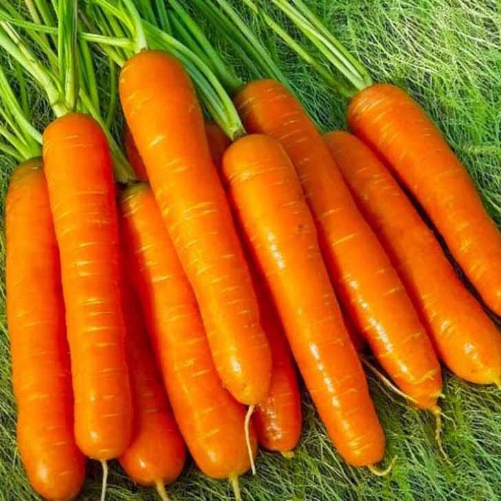 Морковь «Нантская 4». © bloomingarden