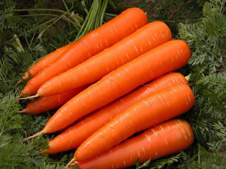 Морковь «Витаминная 6». © habernediyor