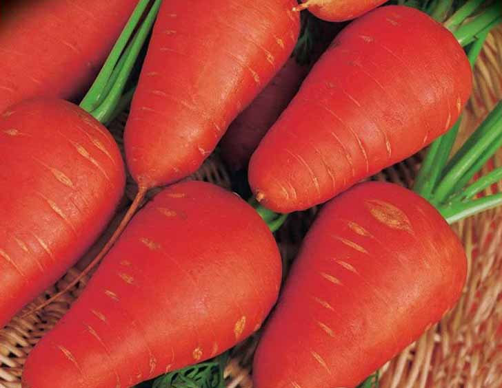 Морковь «Шантенэ 2461». © rozetka