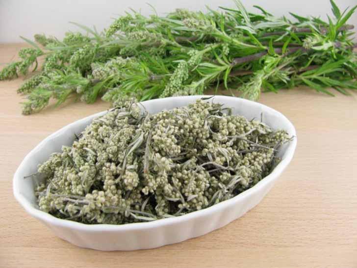 В лечебных целях используют и свежую, и сухую траву (цветки и листья собирают с момента начала цветения)
