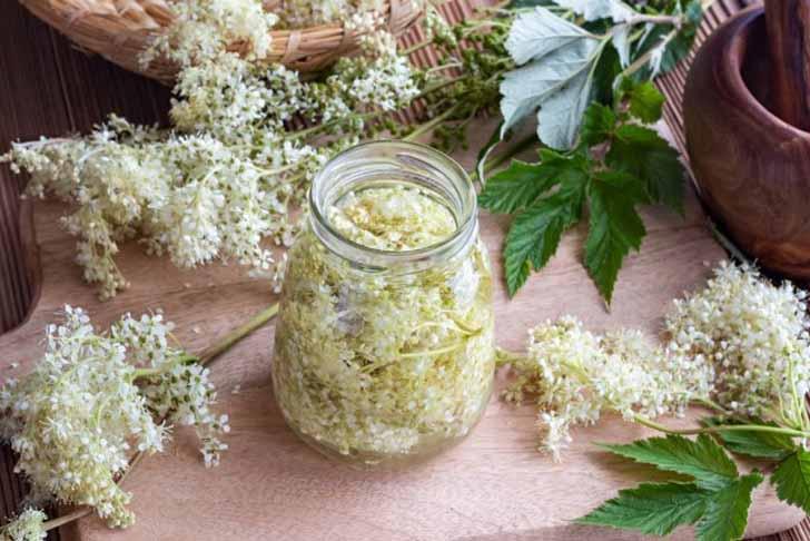 В лечебных целях используют листья и цветки лабазника