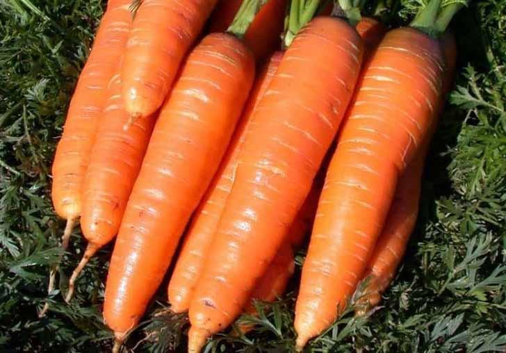 Морковь «Королева Осени». © sornyakov