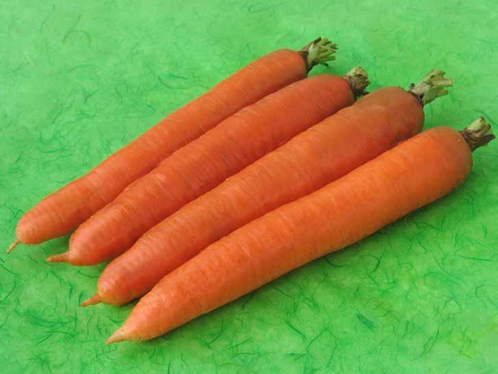 Морковь «Олимпус». © agrovse