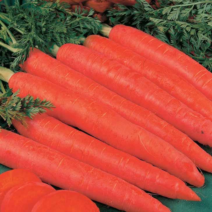 Морковь «Красный Великан». © розалия