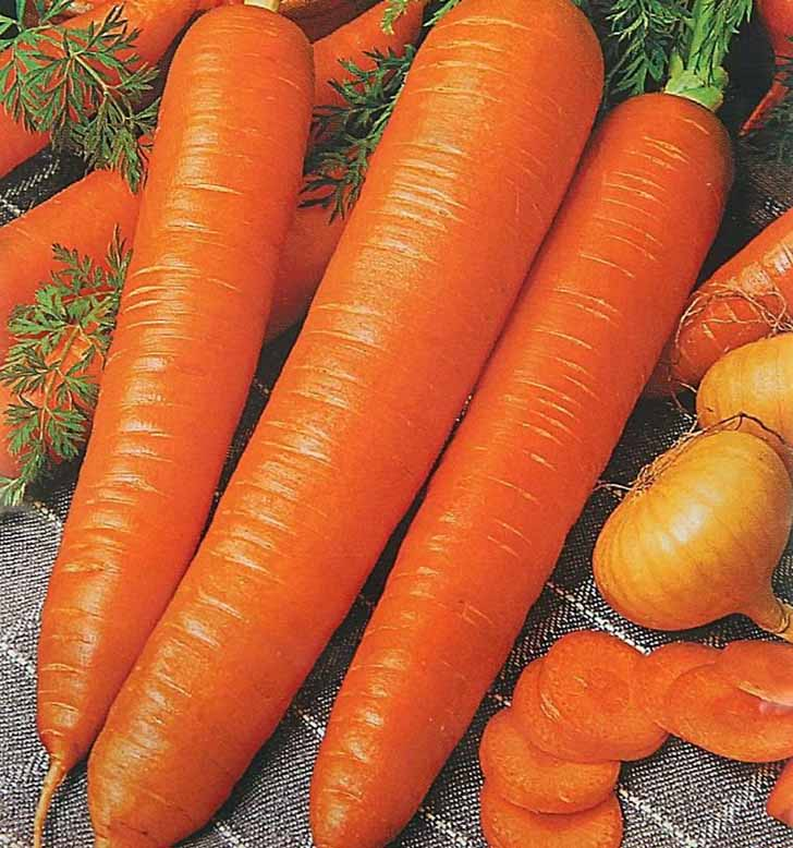 Морковь «Монастырская». © sima-land