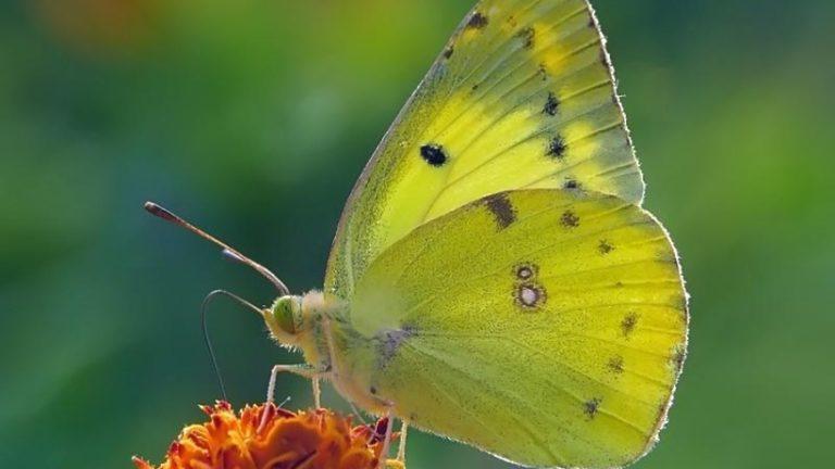 Экологическая акция «Бабушки – бабочкам» стартует в Москве