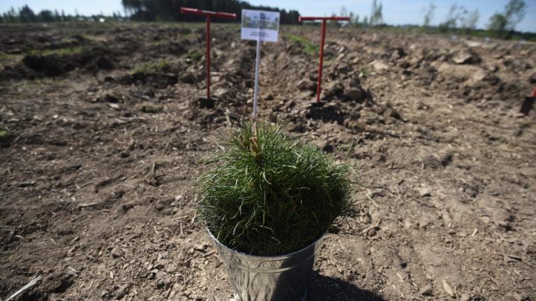 Акция «Лес Победы» пройдет в Подмосковье в субботу (11 мая 2019 года)