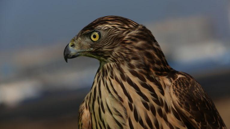 Фестиваль по спортивной орнитологии проведут в Москве 19 мая 2019 года