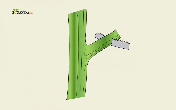 При спиливании толстой ветки всегда делают сначала неглубокий подпил снизу