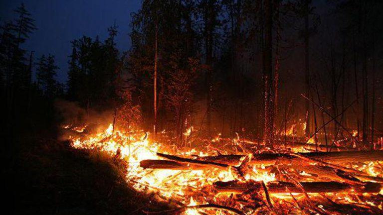 Специалисты зафиксировали 30 лесных пожаров в России