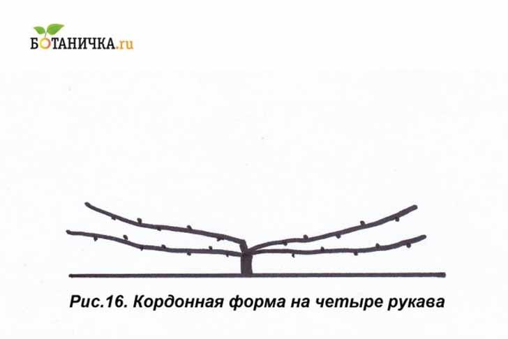 У кордонной формы может быть и не 2, а 4 рукава