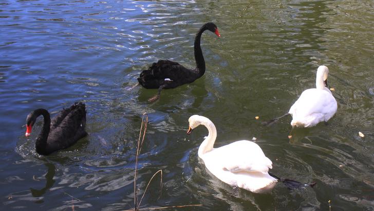 Майдановский парк снова радует своих посетителей