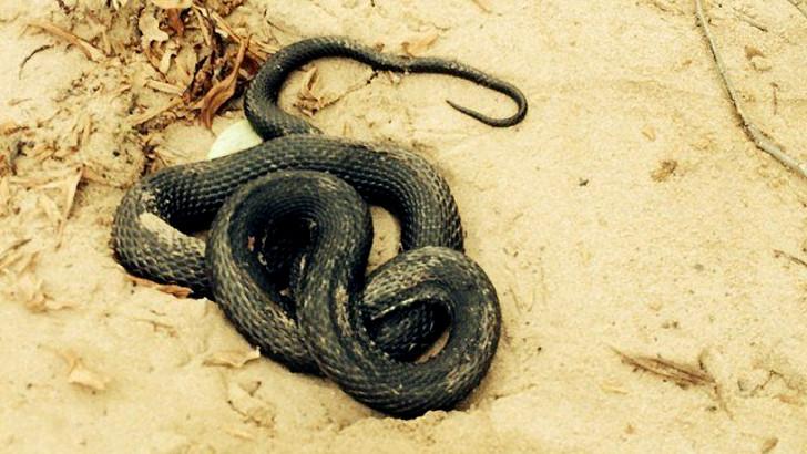 Помни о змеях, в лесу проживающих