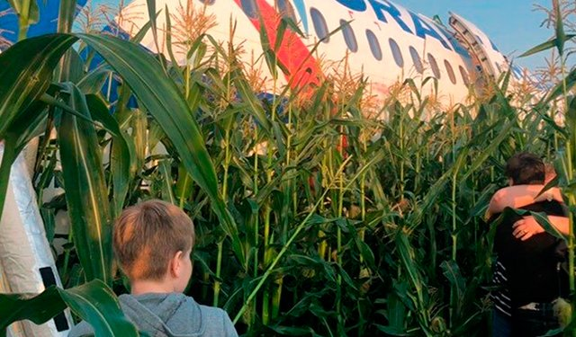 «Идём правее на солнце вдоль рядов кукурузы…»