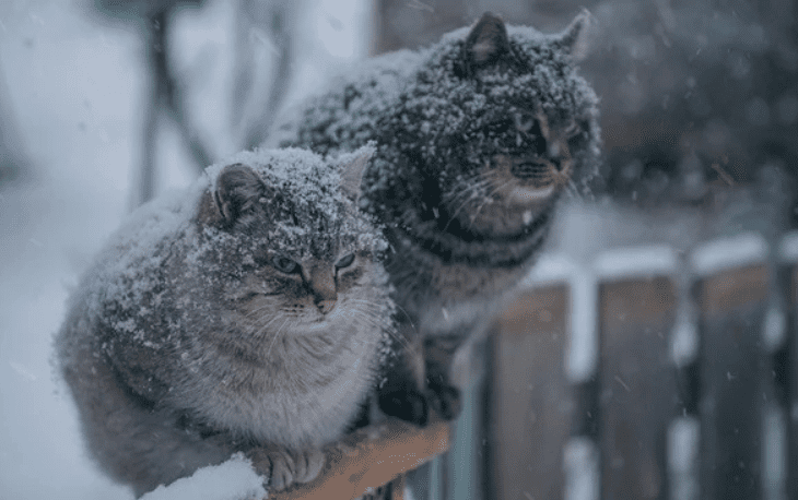 зима и котики2
