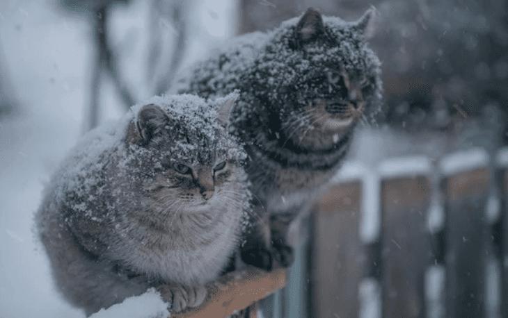 Зима придёт на следующей неделе. Пока без снега