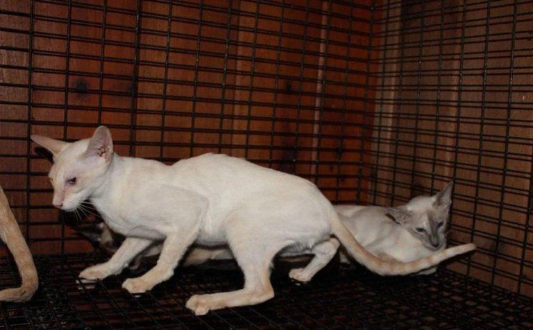 Грузчики аэропорта «Шереметьево» убили двух кошек