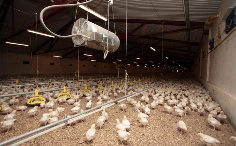 Минэкологии оштрафовало Петелинскую птицефабрику
