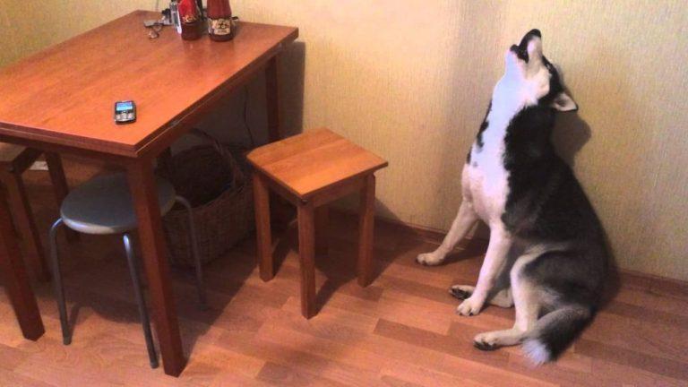 Собака лает, штрафы носят