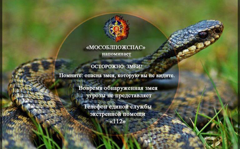 «Мособлпожспас» предупреждает: в Подмосковье проснулись змеи