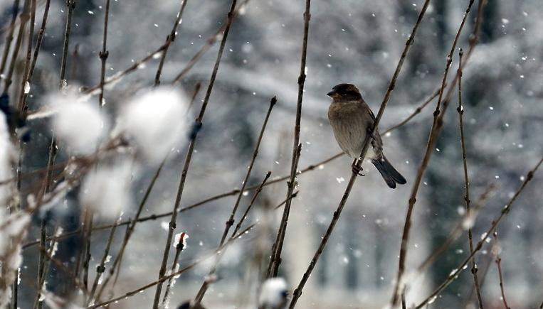 Синоптики предупредили о снеге с дождем