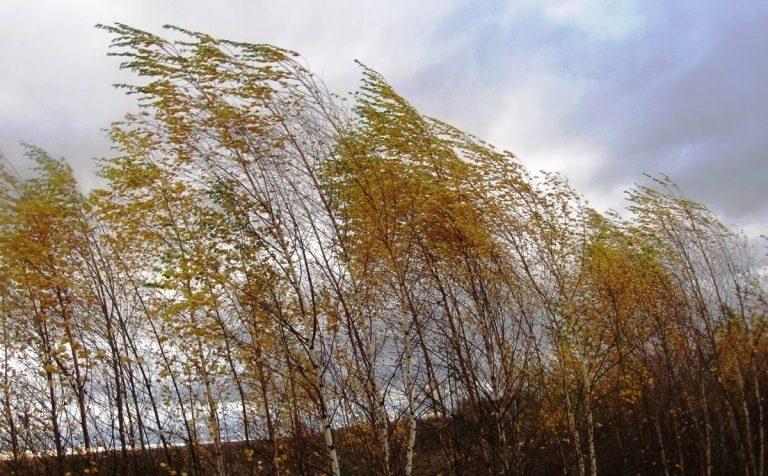 В Московском регионе объявлен желтый уровень погодной опасности