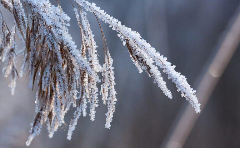 В Московской области ожидаются заморозки