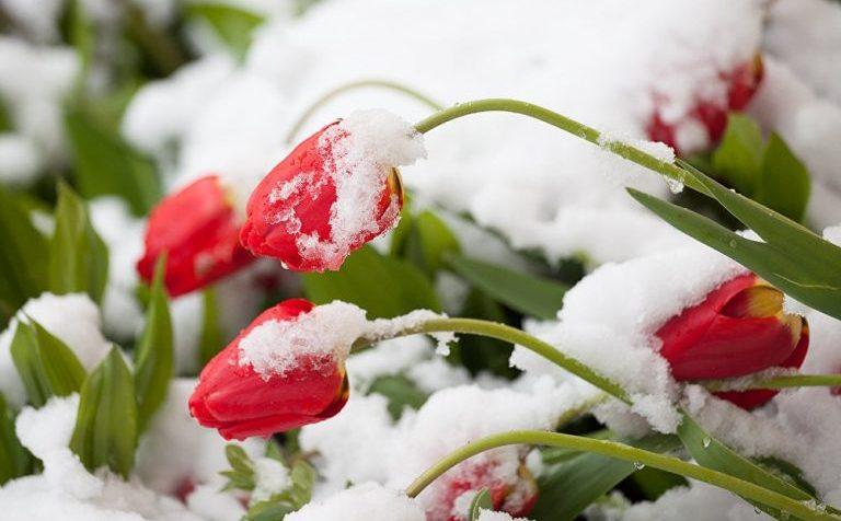 Синоптики: выпадение снега в столичном регионе может повториться
