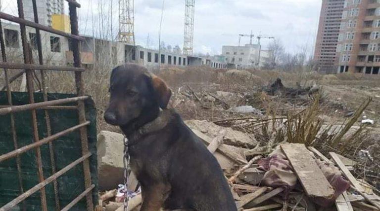 На стройках в Подмосковье запретили содержать собак