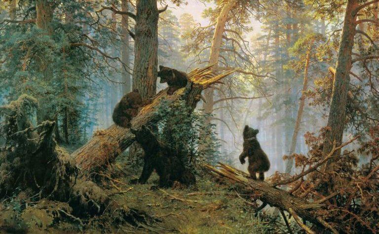 В клинских лесах появились медведи