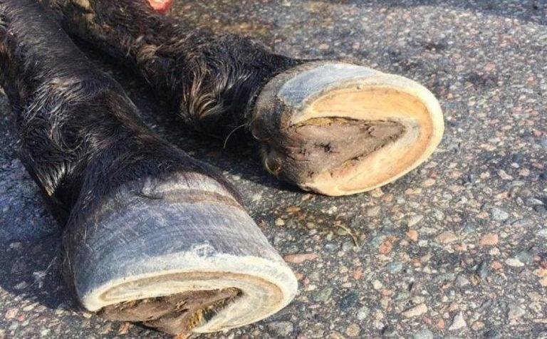 Девочку на лошади сбил автобус в г.о. Клин Московской области