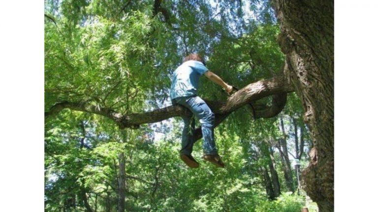 Парень упал с дерева, спилив сук, на котором сидел