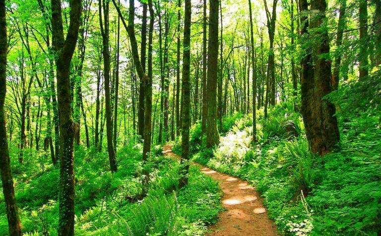 Женщина потерялась в лесу в Солнечногорске